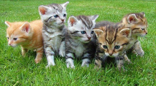 koťata v trávě