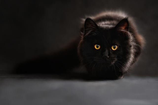 silueta černé kočky