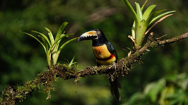 tropický pták
