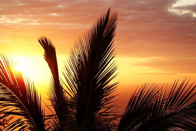 západ slunce za palmou