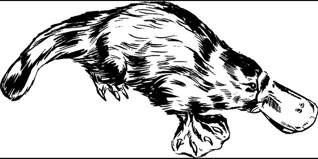 ptakopysk ilustrace