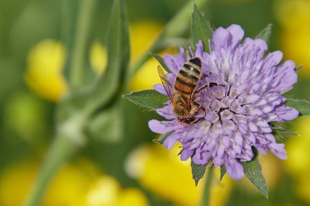 včela a květina.jpg