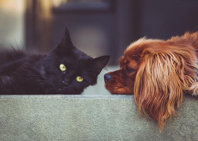 pes a kočka.jpg