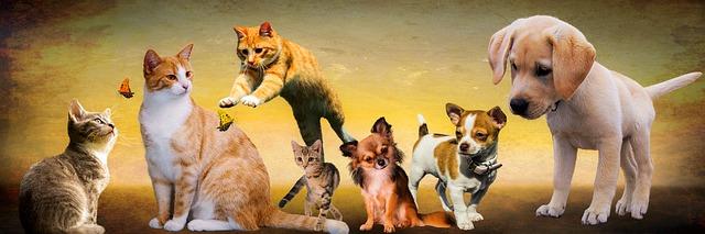 kočičky a pejsci.jpg