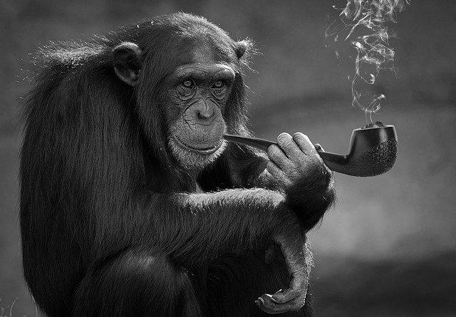 opice s dýmkou
