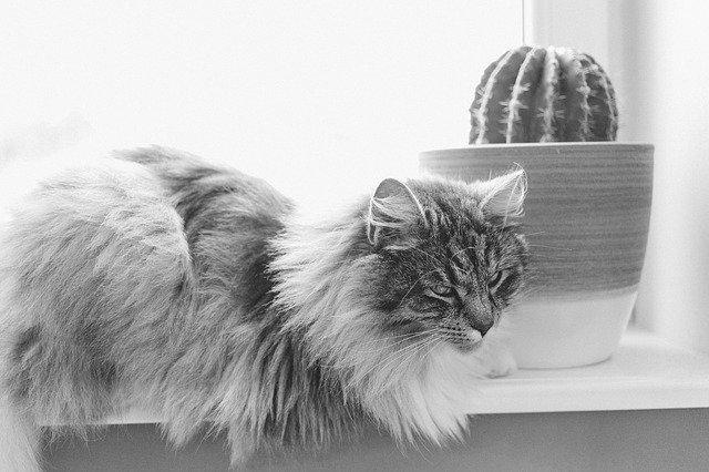 kočka u kaktusu